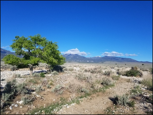1-sagebrush discovery trail
